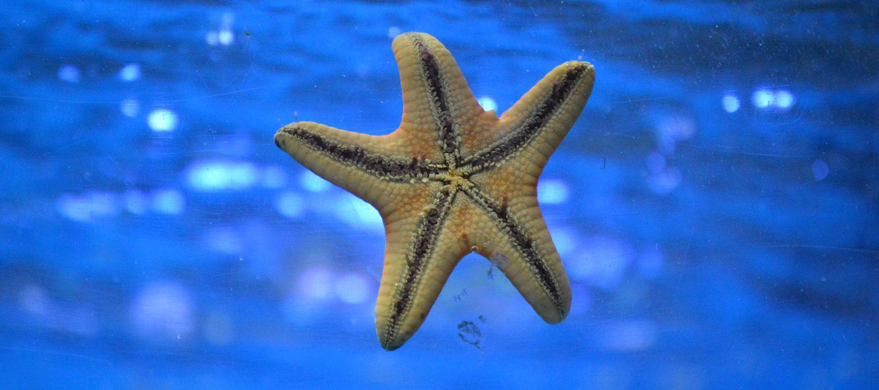 star fish stock image
